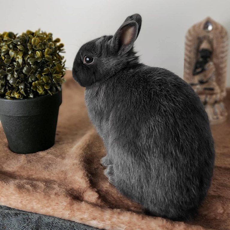 Read more about the article Bien accueillir son lapin