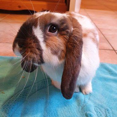 Read more about the article Évitez les erreurs à l'adoption d'un lapin