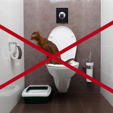 Les chats ne peuvent pas éliminer aux toilettes !