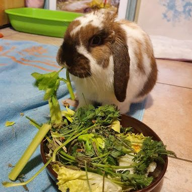 Read more about the article L'alimentation du lapin
