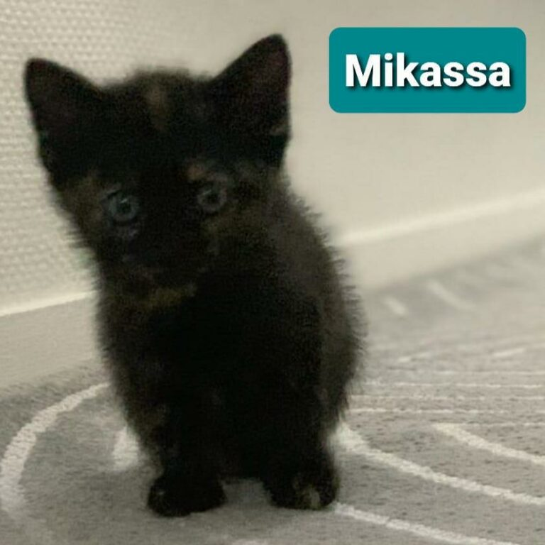 Read more about the article Mikassa